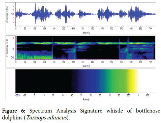 marine-science-research-development-Signature-whistle
