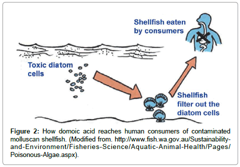 marine-science-research-development-human-consumers