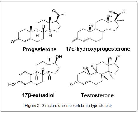 marine-science-research-development-vertebrate-type