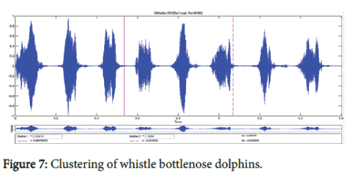 marine-science-research-development-whistle-bottlenose