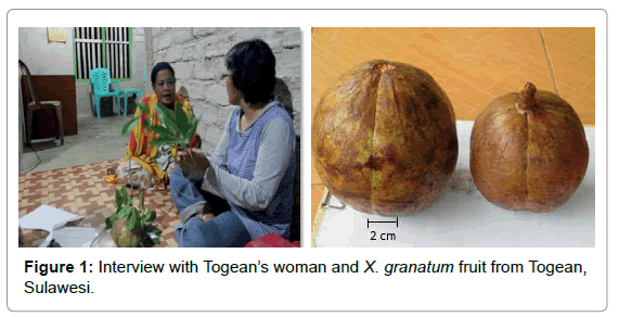 marine-science-research-granatum-fruit