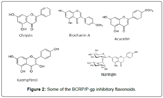 marine-science-research-inhibitory-flavonoids