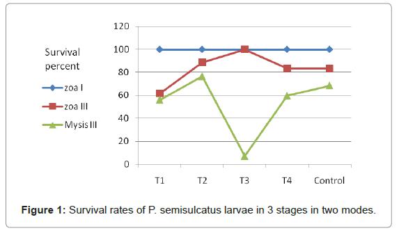 marine-science-research-semisulcatus-larvae
