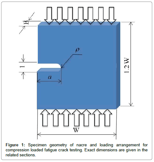 material-sciences-engineering-specimen-geometry