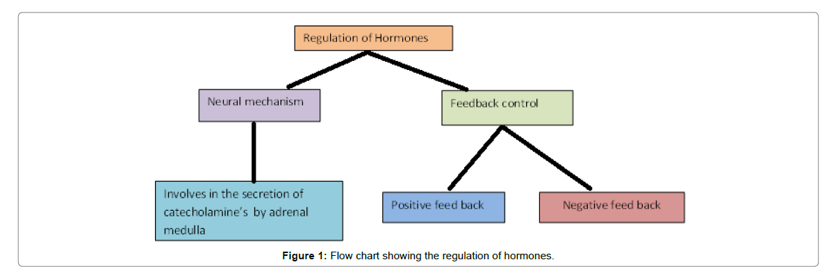 medical-physiology-therapeutics-regulation-hormones