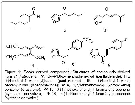 medicinal-aromatic-plants-Perilla-derived
