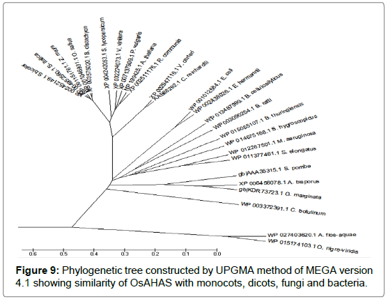 medicinal-aromatic-plants-Phylogenetic-tree