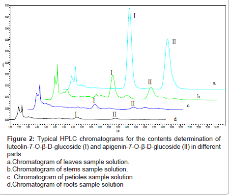 medicinal-chemistry-Chromatogram-leaves
