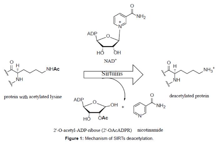 medicinal-chemistry-Mechanism-SIRTs