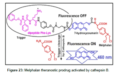 medicinal-chemistry-Melphalan-theranostic