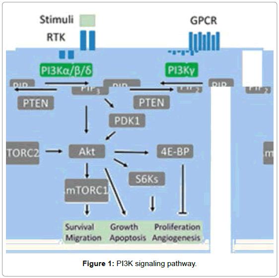 medicinal-chemistry-PI3K-signaling-pathway