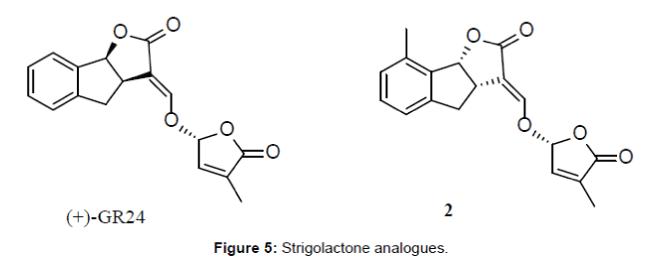 medicinal-chemistry-Strigolactone-analogues