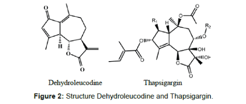 medicinal-chemistry-Structure-Dehydroleucodine-Thapsigargin