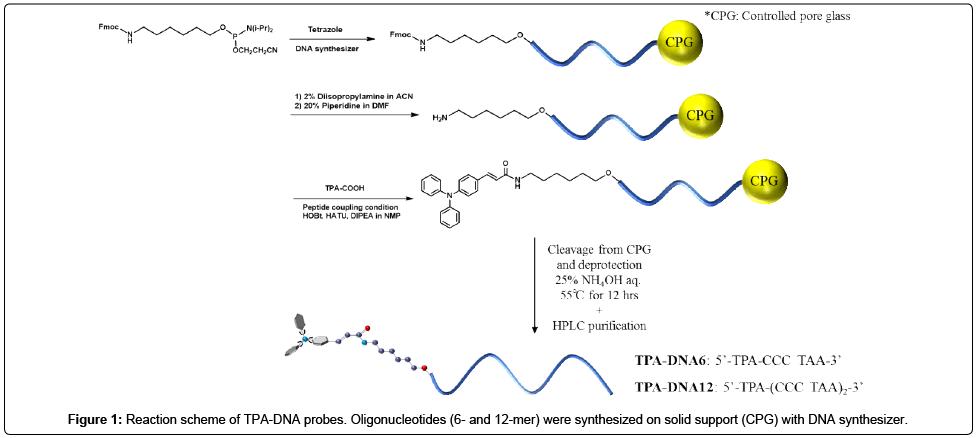 medicinal-chemistry-TPA-DNA-probes
