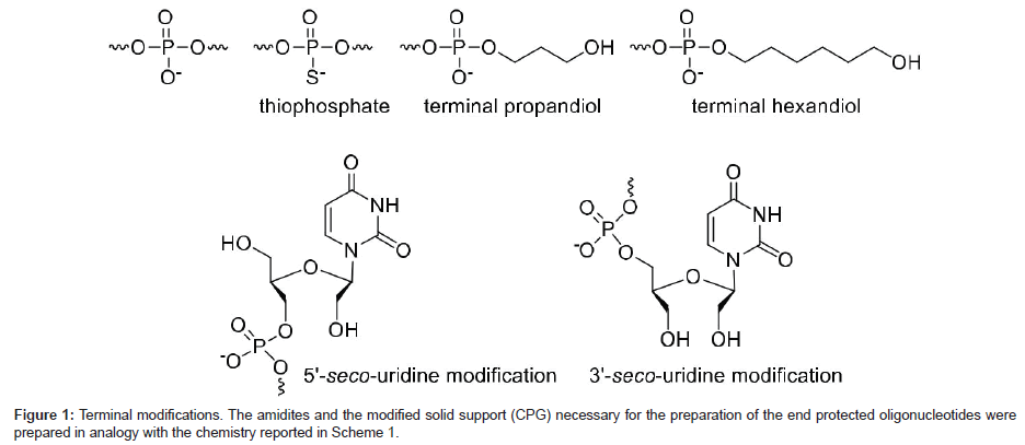 medicinal-chemistry-Terminal-modifications