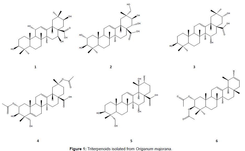 medicinal-chemistry-Triterpenoids-isolated-Origanum