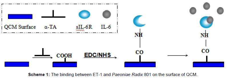 medicinal-chemistry-binding-Paeoniae-surface
