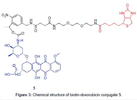 medicinal-chemistry-biotin-doxorubicin