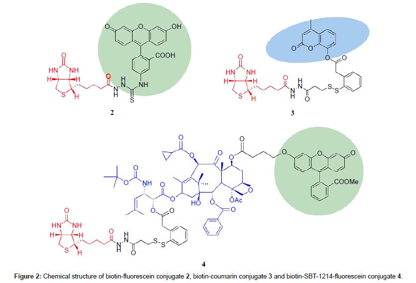 medicinal-chemistry-biotin-fluorescein