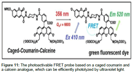 medicinal-chemistry-caged-coumarin