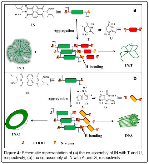 medicinal-chemistry-co-assembly