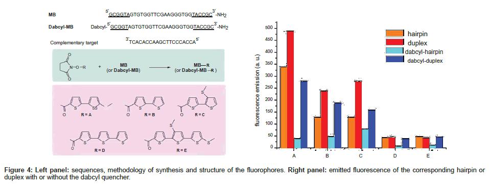 medicinal-chemistry-dabcyl-quencher