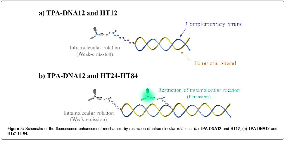 medicinal-chemistry-fluorescence-enhancement
