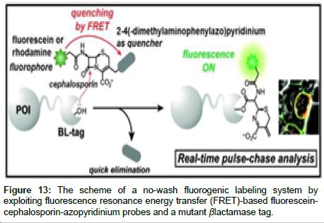 medicinal-chemistry-fluorogenic-labeling-system