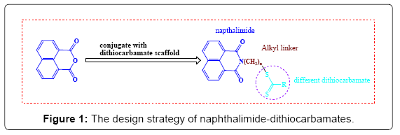 medicinal-chemistry-naphthalimide-dithiocarbamates