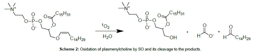 medicinal-chemistry-plasmenylcholine