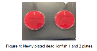 medicinal-chemistry-plated-dead-lionfish