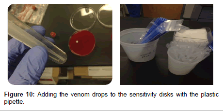 medicinal-chemistry-sensitivity-disks