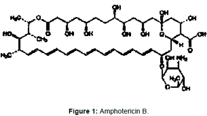 membrane-science-technology-Amphotericin-B