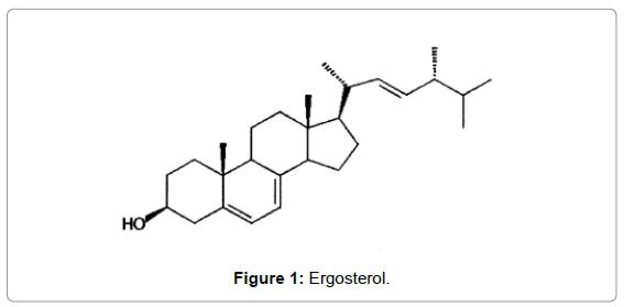 membrane-science-technology-Ergosterol
