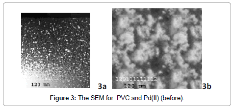 membrane-science-technology-SEM-for-PVC