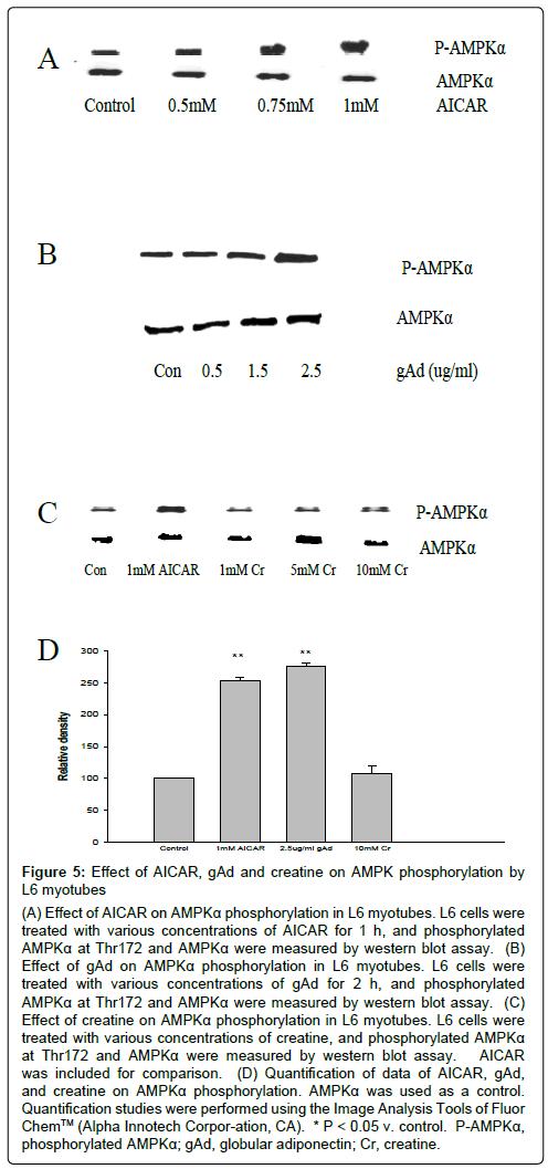 metabolomics-AMPK-phosphorylation