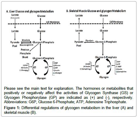 metabolomics-glycogen-metabolism