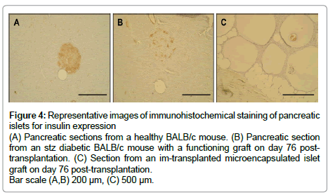 metabolomics-immunohistochemical-staining