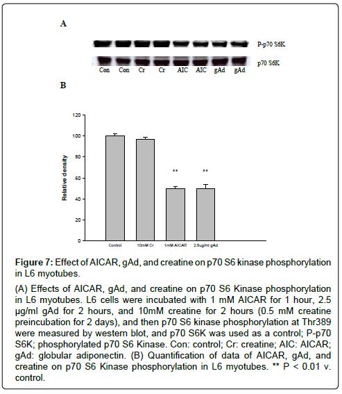 metabolomics-kinase-phosphorylation