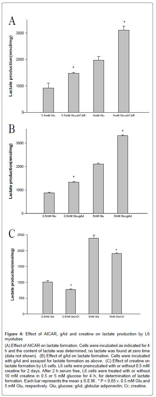 metabolomics-lactate-formation