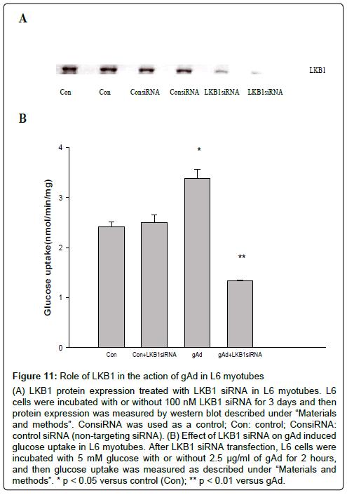 metabolomics-siRNA-transfection