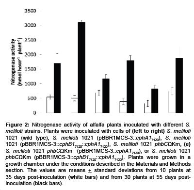 microbial-biochemical-technology-alfalfa-plants