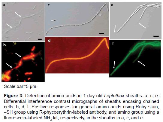 microbial-biochemical-technology-amino-acids-sheaths