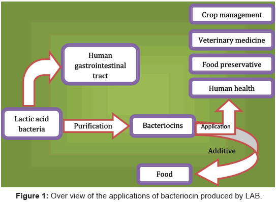 application of lactic acid bacteria Lactic acid bacteria (lab) are ubiquitous microorgan- isms that can be  note:  over-application of lab culture to fruit crops may result in the.
