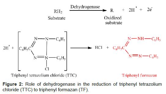 microbial-biochemical-technology-dehydrogenase-triphenyl-tetrazolium