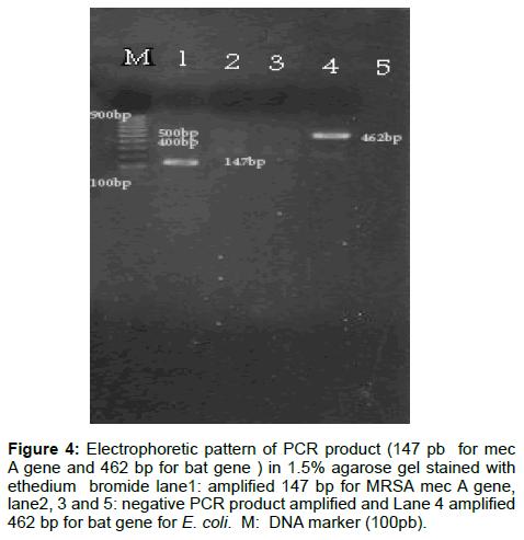 microbial-biochemical-technology-electrophoretic-ethedium-bromide