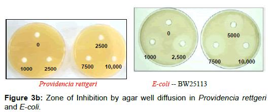 microbial-biochemical-technology-inhibition-agar-diffusion