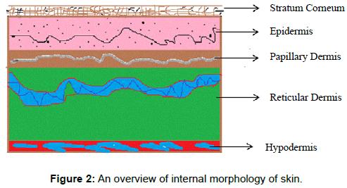 microbial-biochemical-technology-internal-morphology-skin