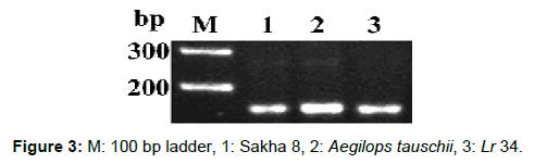 microbial-biochemical-technology-ladder-sakha