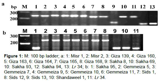 microbial-biochemical-technology-ladder-sakha-gemmeiza